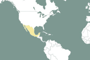helsa 2019 – neues Werk in Mexiko entsteht